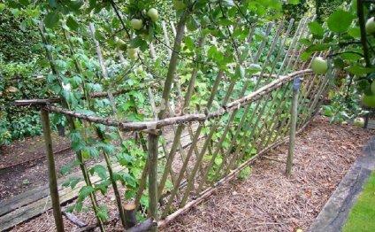 Пример кустовой подвязки